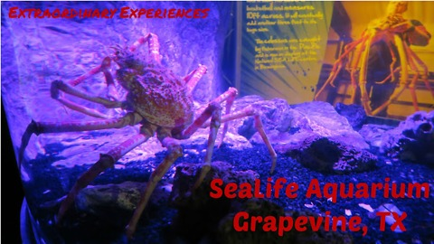 Is that thing real? | SeaLife Aquarium VLOG