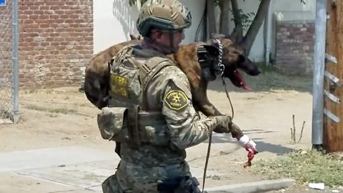 Courageous police K9 shot in the paw in the line of duty makes incredible recovery to serve his community again
