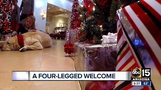 Scottsdale hotel guests welcomed by canine ambassadors - Video