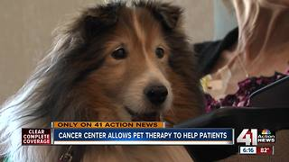 Therapy pets provide love, support to Kansas City patients