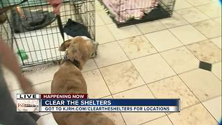 Clear the Shelters 2017 - Video