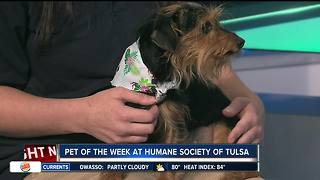 Pet of the Week: Leela