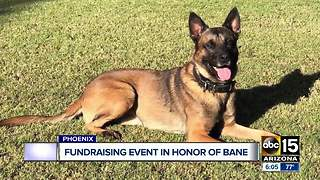 Fundraiser Saturday in honor of fallen Phoenix Police K-9 Bane - Video