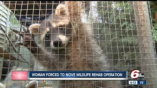 Woman forced to move wildlife rehab operation in Lebanon - Video