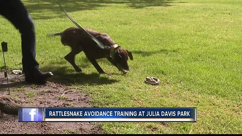 Dog owners take pets to rattlesnake avoidance training class