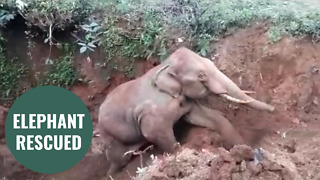 Elephant rescued from a well using a digger - Video