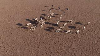 Alluring Beauty of Namib Desert, Namibia - Video