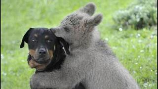 Bear Cub Rescued by Family