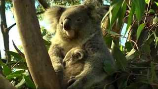 Six-Month-Old Lulu Introduced to Public at Australian Reptile Park - Video