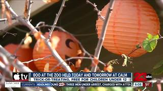 Boo at the Zoo event held at Calm this weekend for trick-or-treating around the zoo - Video