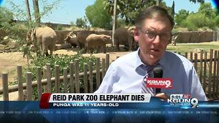 Elephant dies at Tucson's Reid Park Zoo - Video