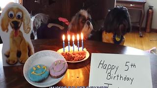 25 Adorable Animals Celebrating Birthdays - Video