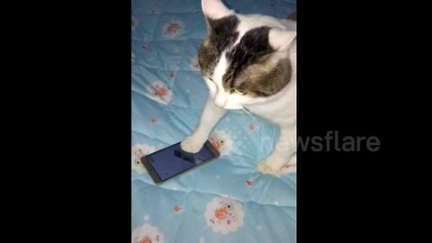 Cat gets mad after losing at mobile game