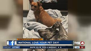 National love your pet day - Video