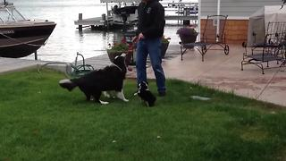 The Cutest Puppy Meets Her Dad - Video