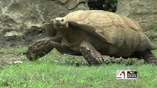 ZOOSDAY: Tortoise exhibit - Video