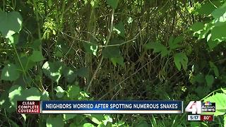 Independence neighborhood fights snake infestation - Video