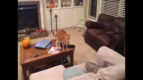 Cat and Dog have Sibling Spat