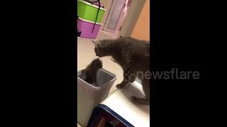 Mother cat accidentally drops kitten into bin