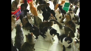 Woman Lives With 130 Cats - Video
