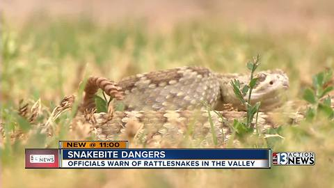 What you need to know for Las Vegas rattlesnake season