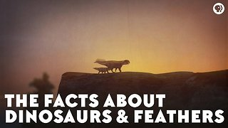 The Facts About Dinosaurs & Feathers - Video