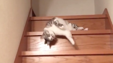 Lazy Cat Down the Stairs - Laziest Cat Ever