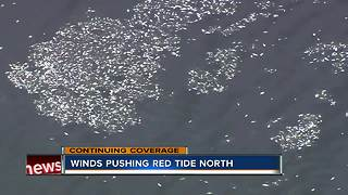 Red tide impacting Longboat Key beaches, killing thousands of fish - Video