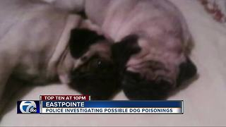 Neighbors in Eastpointe worry someone is poisoning their dogs - Video
