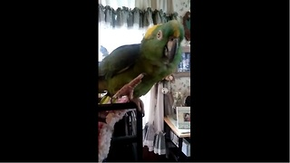 Parrot and human sing duet together - Video