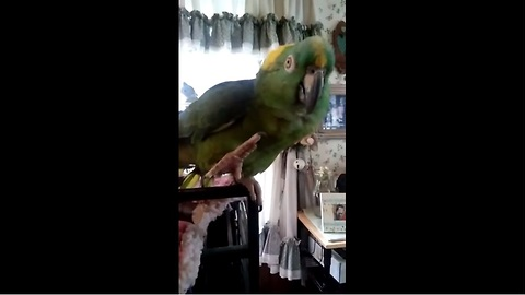Parrot and human sing duet together