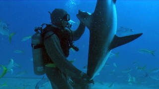 Diver Puts Sharks Into A Trance - Video