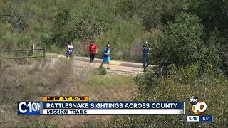 Rattlesnake sightings across San Diego County - Video