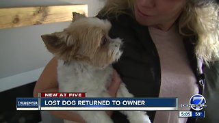 Lost dog returned to owner