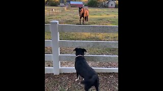 Dog and horse become unexpected friends
