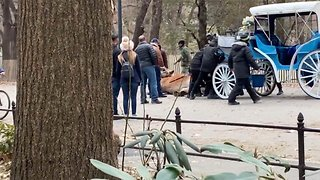 Shocking footage shows NYC central park horse collapsing