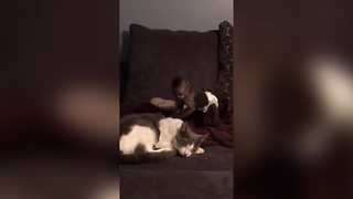 Small Monkey Tries To Wake Cat - Video