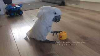 Cockatoo vs. Thistle Seed - Video