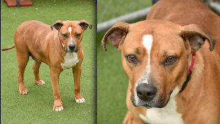 Cleveland APL Pet of the Weekend: A 6-year-old dog named Cash