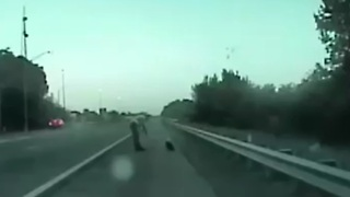 Florida Highway Patrol trooper heroically rescues bald eagle - Video