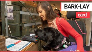 Assistance dog helps young disabled woman pay for shopping!
