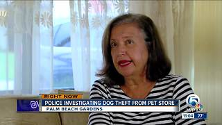 Police: Family's dog stolen from Palm Beach Gardens Petco - Video