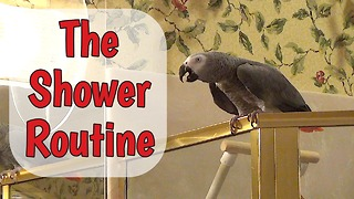 Parrot performs necessary task before taking shower - Video