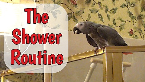 Parrot performs necessary task before taking shower