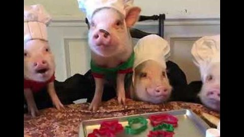 Pug and Pig Pals Look the Part as Christmas Cookie Bakers