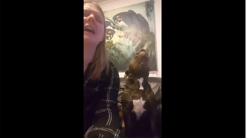 Owner Tries To Sing 'Chandelier' While Funny Dog Howls Along