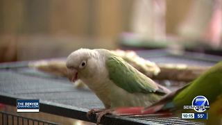 Two dead birds, carbon monoxide, and a gas range to blame? - Video