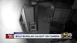 Chandler shoe bandit caught on camera - Video