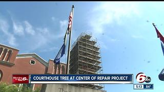 Courthouse tree at center of repair project - Video