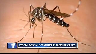 West Nile virus confirmed in Canyon County